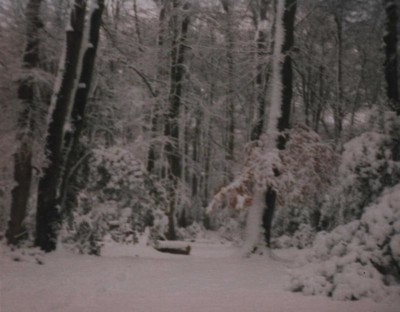 The 8 inches of 6 February 1994 in the New Forest