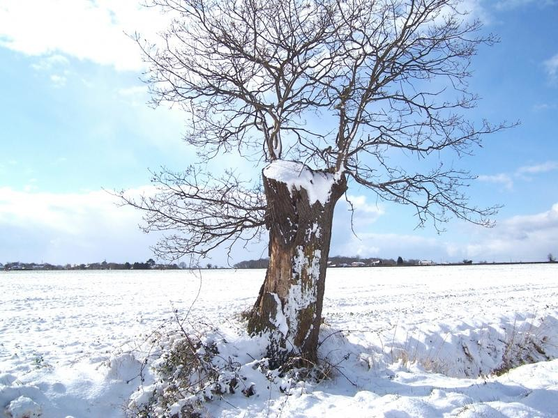 Snow Swept Tree.JPG
