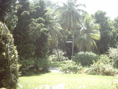 Paradise: Garden of the Groves. Grand Bahama.