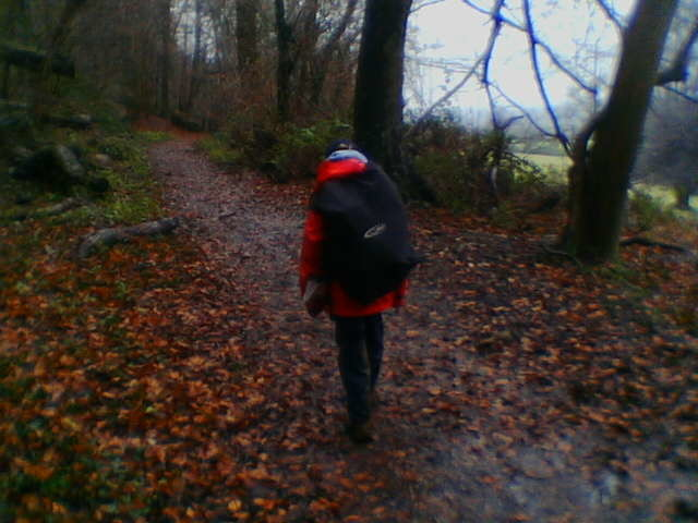Walking in the woods in the rain 30/12/05