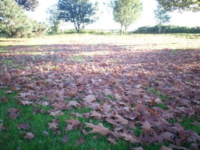 Scattered leaves...