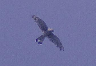 Whitefield Harrier  25th July 2006. 009.jpg