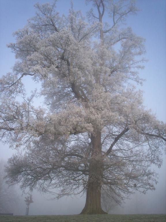 Hoar frost on the tree 21/12/07