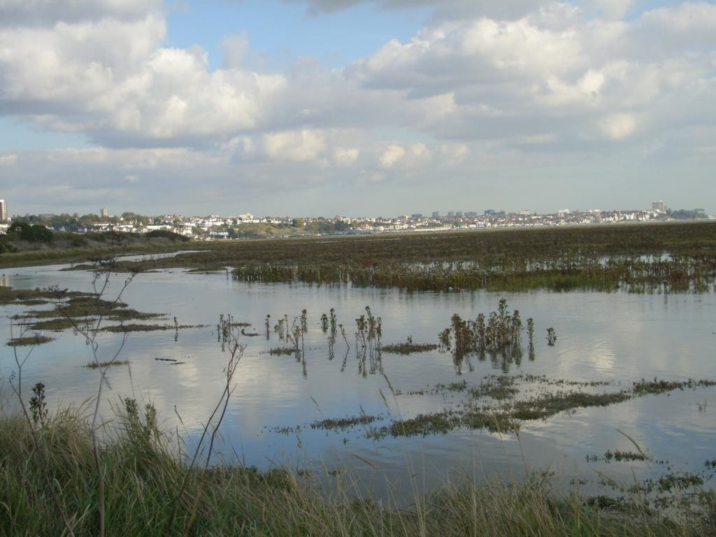 Marginal Tidal Saltmarsh Two Tree Island
