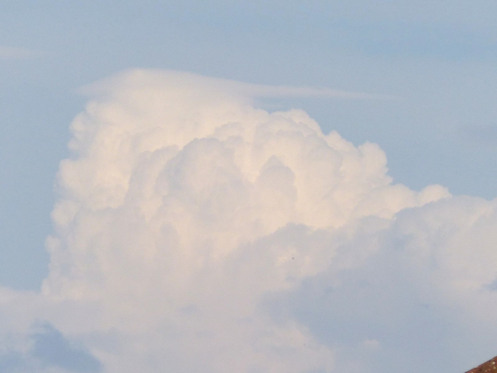 Cumulus with a hint of Pileus