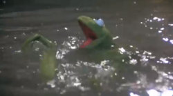 Swimming Muppet.png