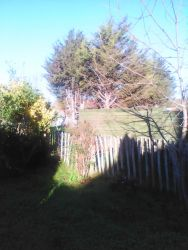 Sunny morning in my back garden in South Ockendon 001.jpg