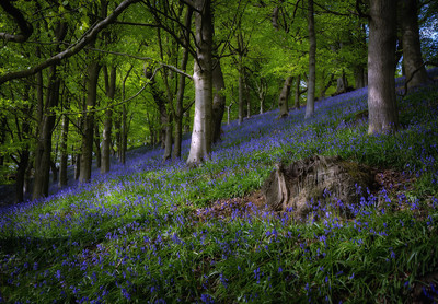Bransdale Bluebells 12th May 2019