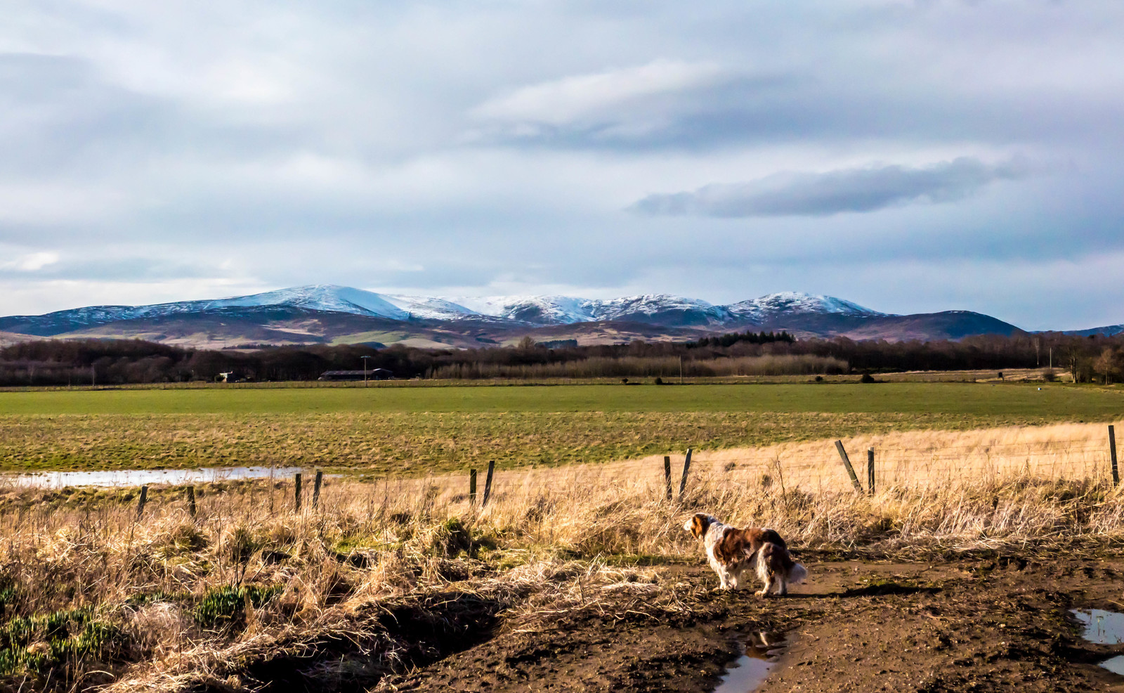 Eastern Cairngorms and Jess